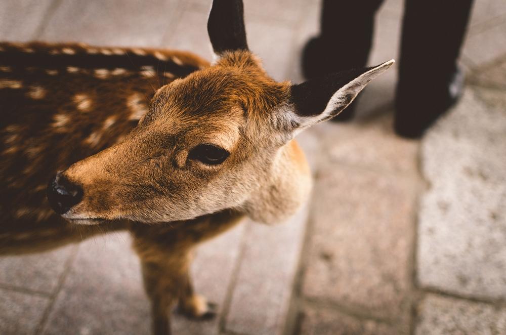 Bambi en Japón